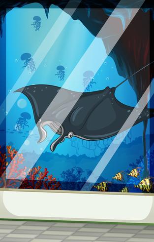Stingray och fisk i akvariet