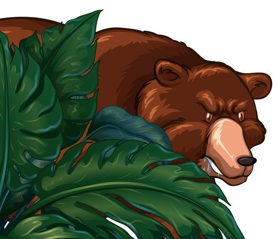 Oso Grizzly salvaje detrás del arbusto