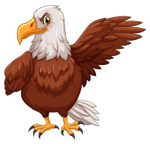 Águila de pie sobre fondo blanco