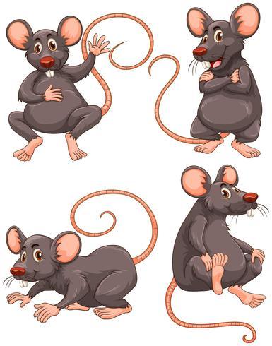 Rato com pêlo cinzento em quatro ações vetor