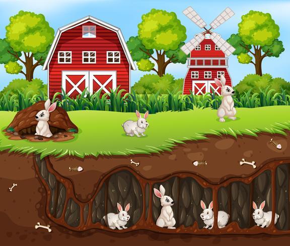 konijn huis ondergronds de boerderij vector