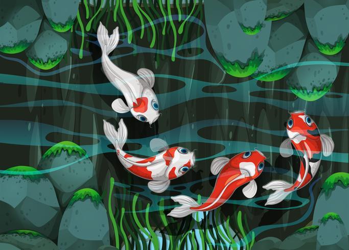 Fyra fiskar som simmar i dammen