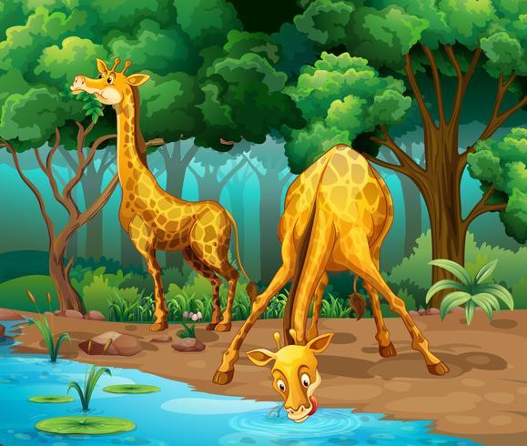 Twee giraffen die in het bos leven