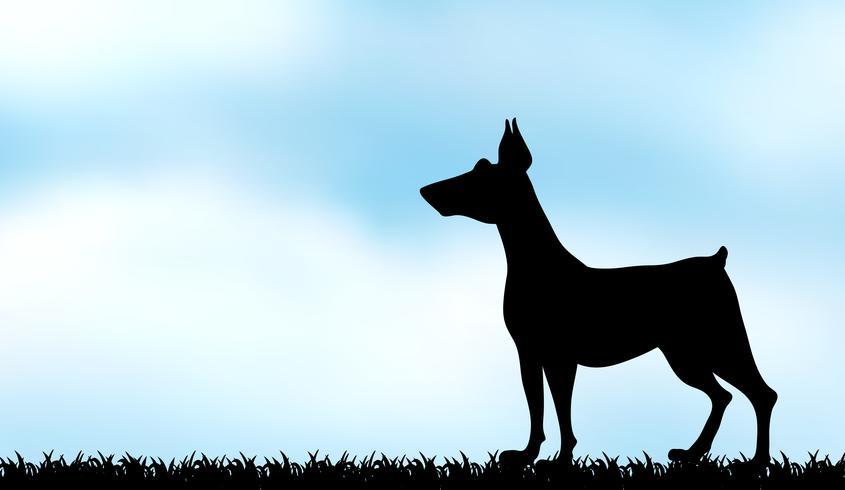 Silhouetwindhond op het gebied