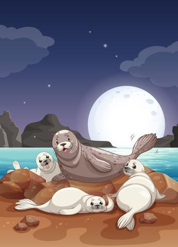 Focas que viven junto al mar por la noche. vector