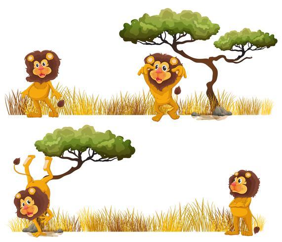 Löwen, die auf dem Feld leben