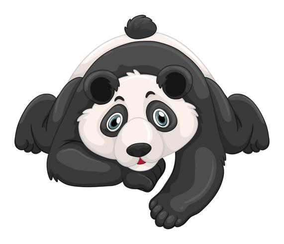 Panda bonito rastejando no chão