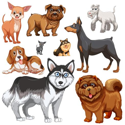 Different types of dogs
