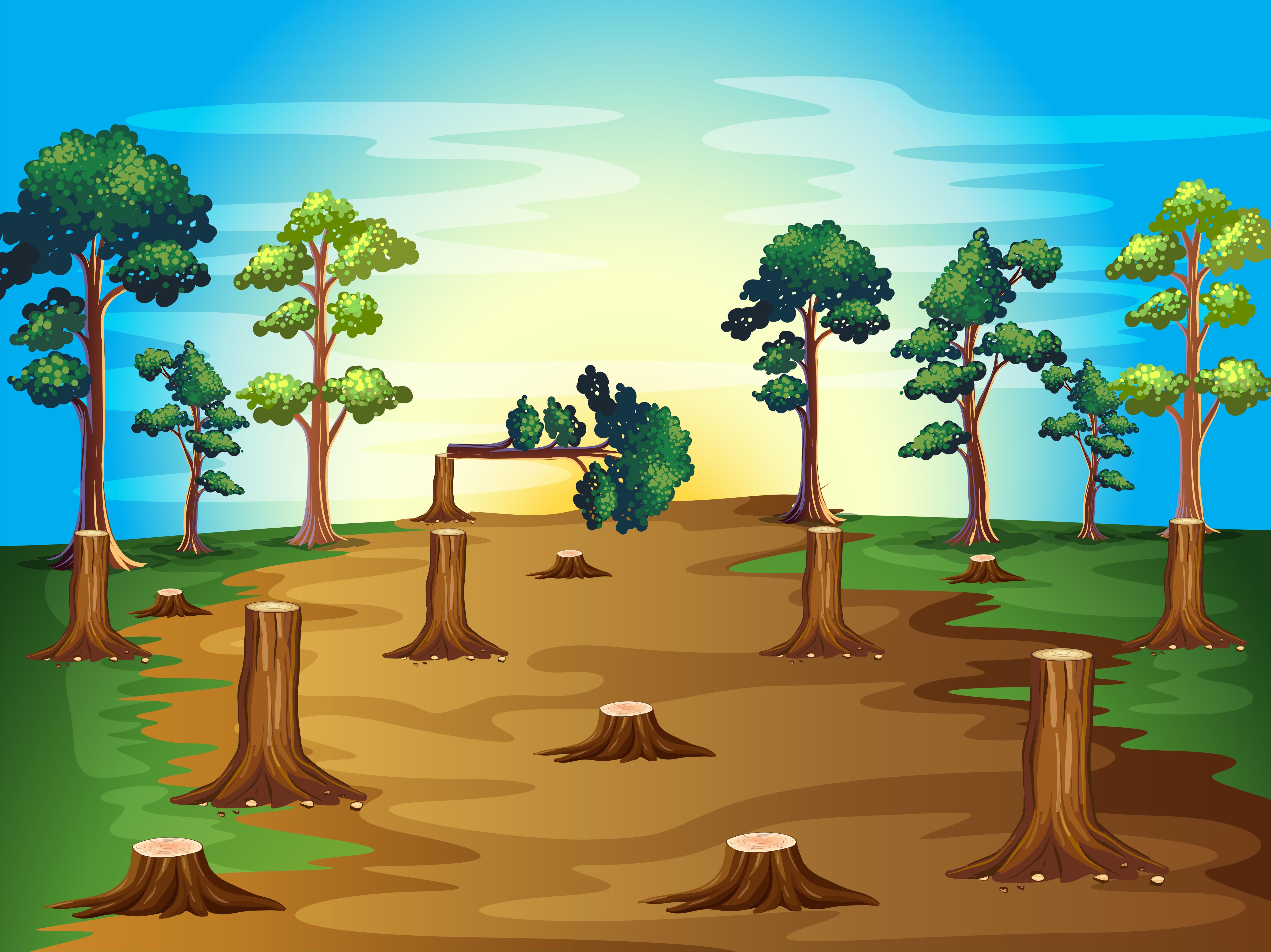 deforestation scene at sunset