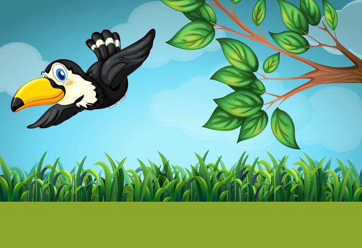 Scene with toucan flying in the field