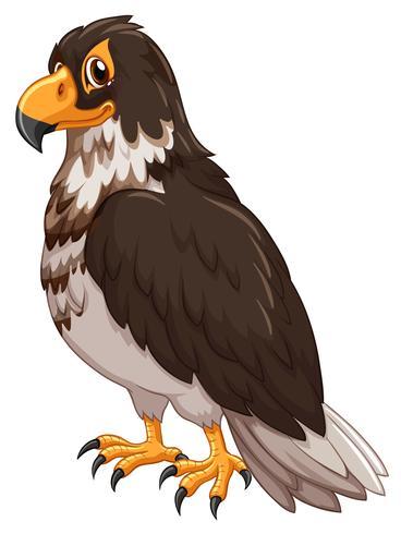 Eagle withe grå fjäder