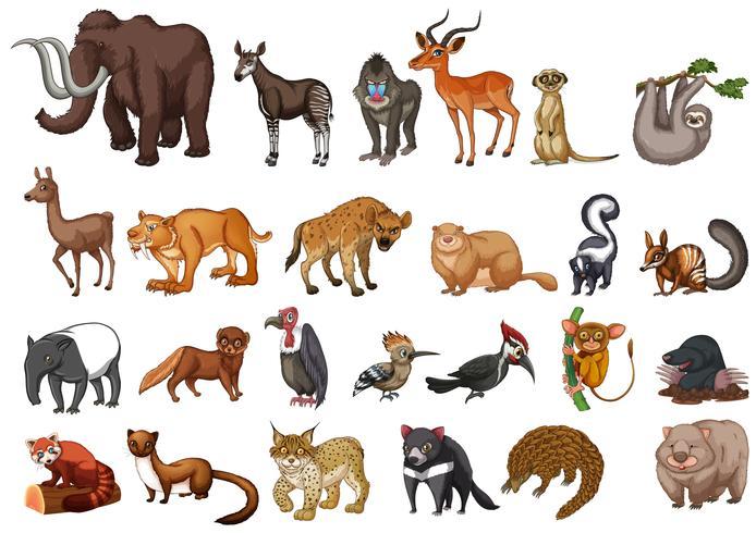 Olika typer av vilda djur på vitt