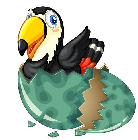 El tucán sale del huevo gris