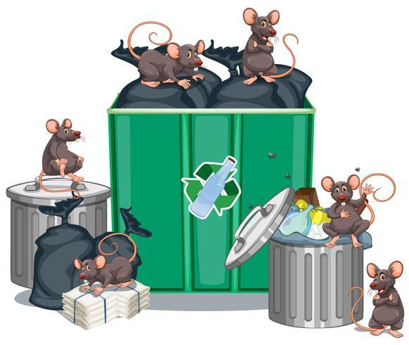 Ratos à procura de comida de latas de lixo
