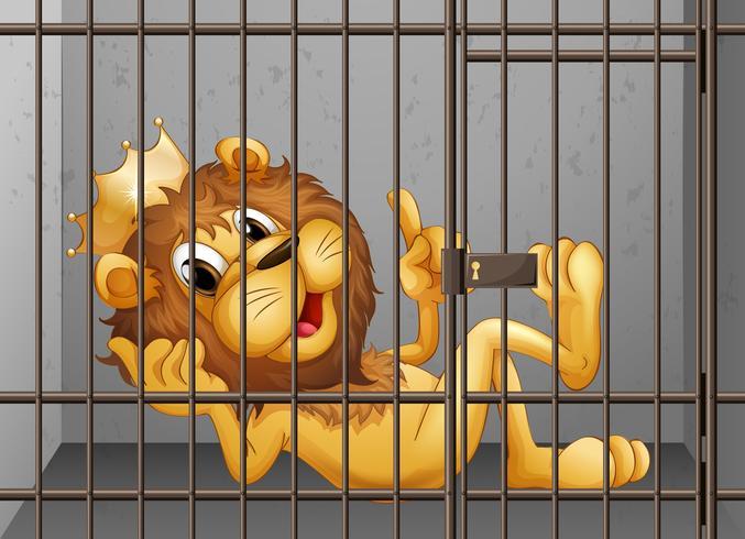 Leão sendo trancado na gaiola