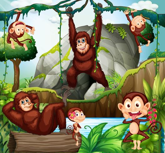 Different types of monkeys in forest