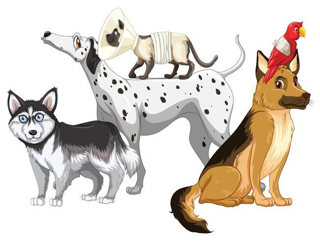 Perros y gatos enfermos vector