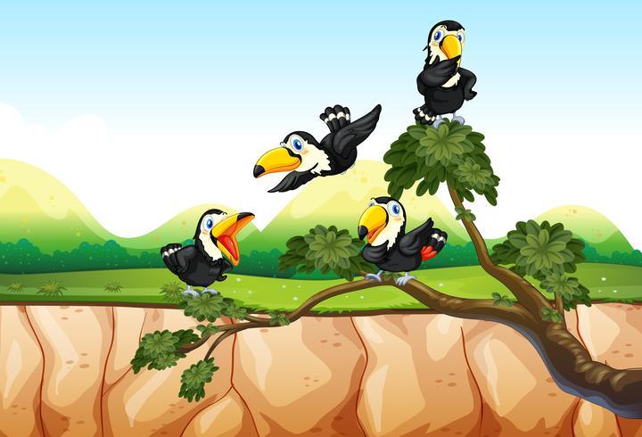 Toucans sur la branche