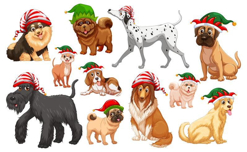 Cachorros com chapéus de natal