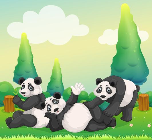 Três pandas brincando no parque