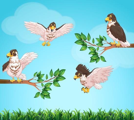 Vier adelaars die in hemel vliegen