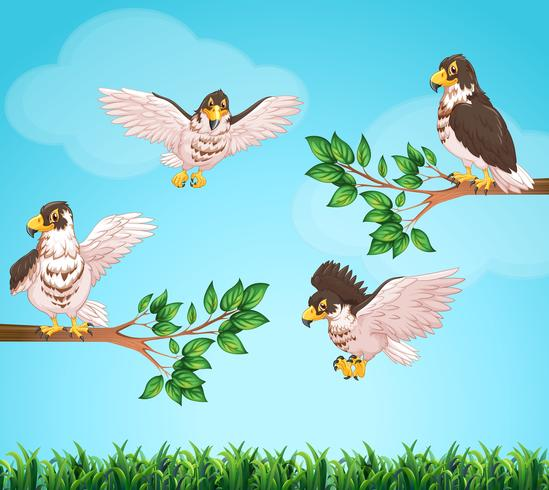 Vier Adler fliegen in den Himmel