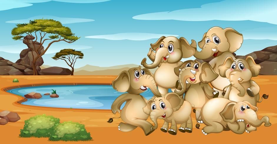 De nombreux éléphants vivant au bord de l'étang