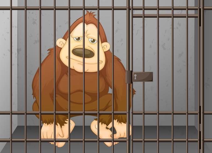 Chimpanzé sendo trancado na gaiola