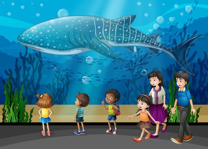 Baleia assassina no aquário
