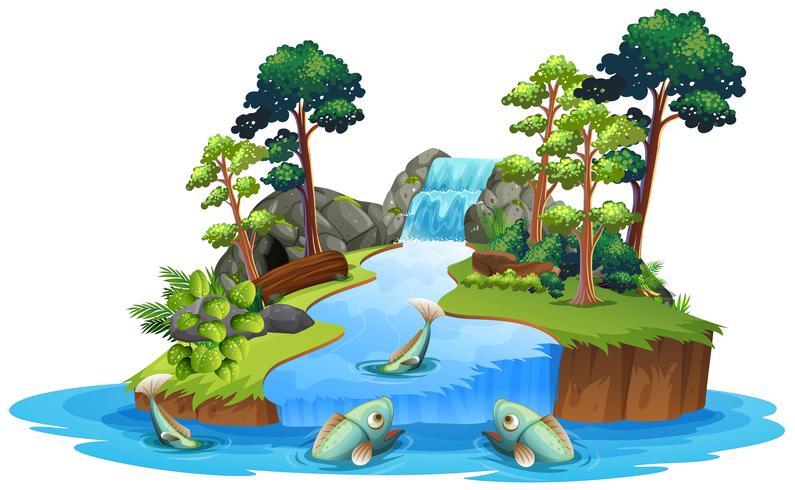 Getrennter Fisch im Fluss