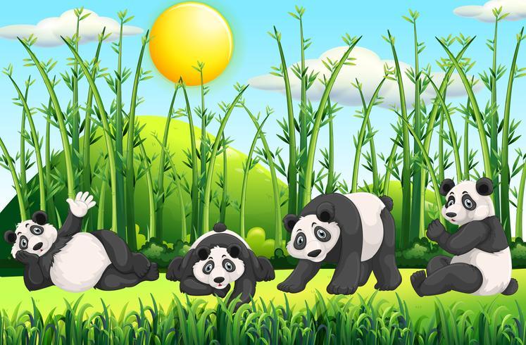 Quatro pandas no campo