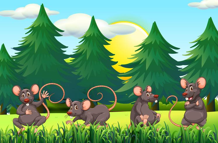 Quatro ratos no campo