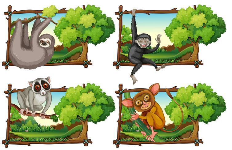 Vilda djur som hänger på grenen vektor