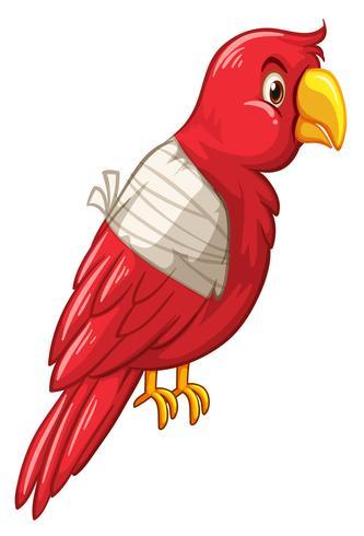 Pássaro papagaio é ferido