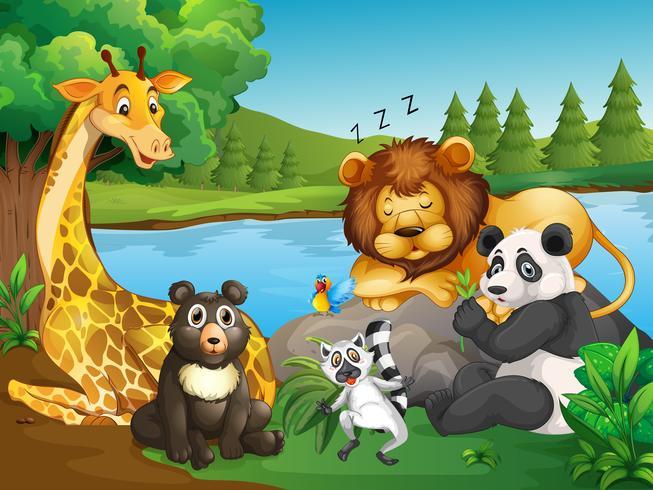 Muchos tipos de animales salvajes por el lago.