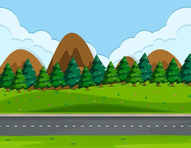 Uma bela estrada natural