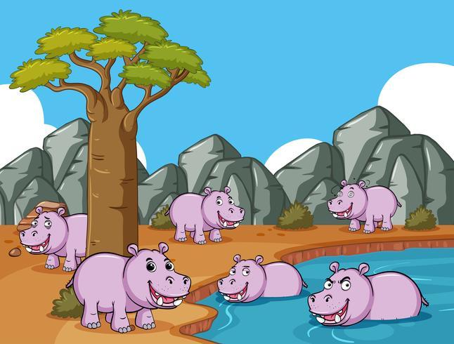 Muitos hipopótamos no campo pela lagoa