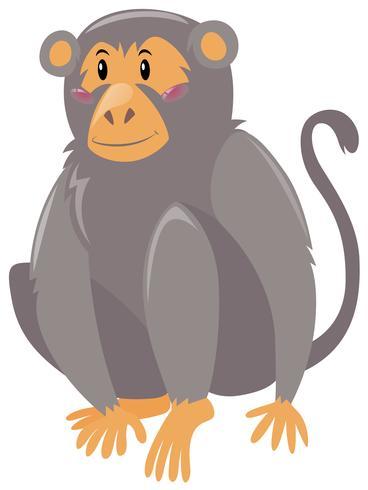 Netter Affe auf weißem Hintergrund