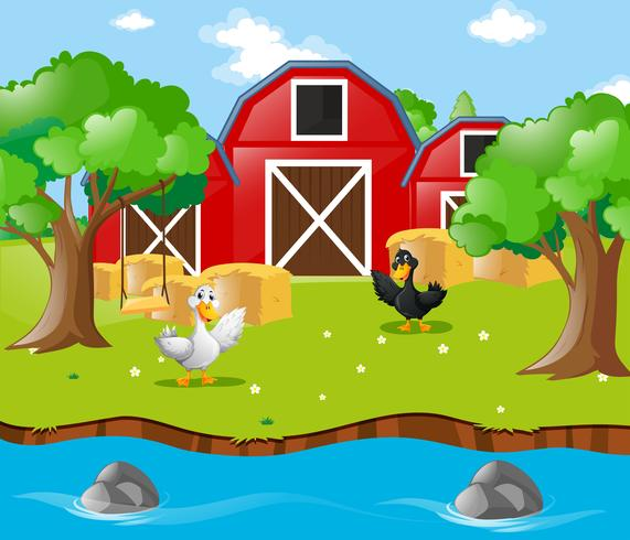 Dois patos na fazenda