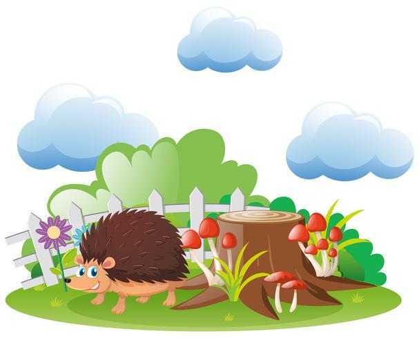 Hedgehog som bor i trädgården