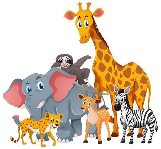 Animais silvestres em grupo vetor
