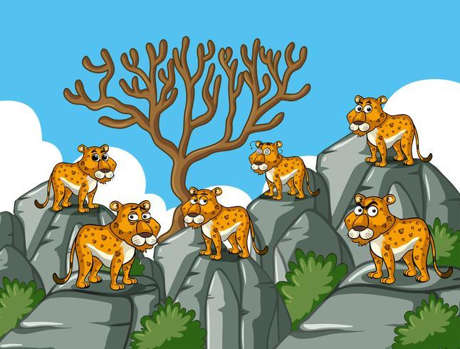 Guépards, debout, sur, rocheux, montagne