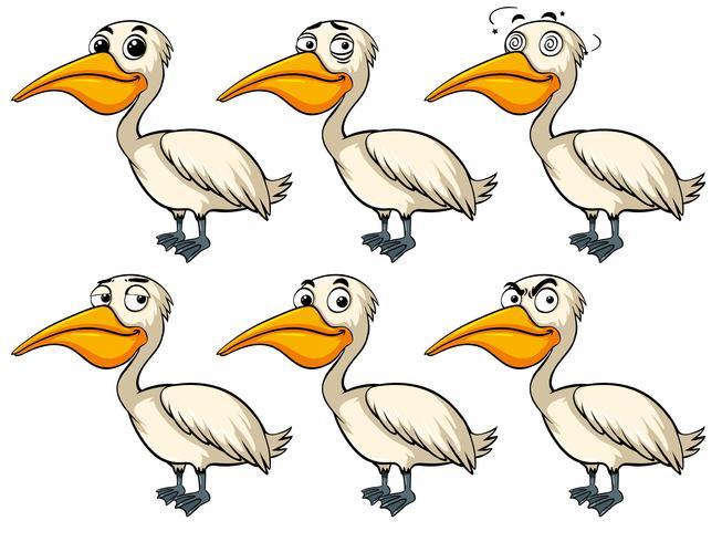 Pelican fågel med olika känslor