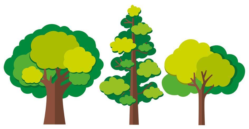 Diferentes tipos de árvores