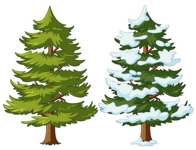 Pino con e senza neve