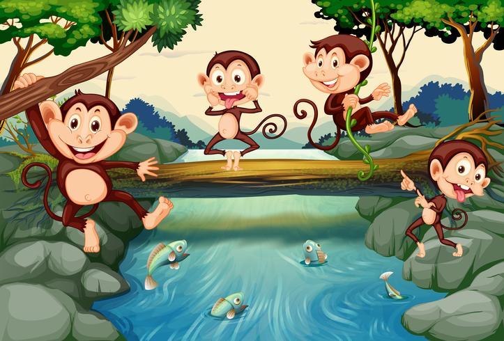 Quatre singes au bord de la rivière