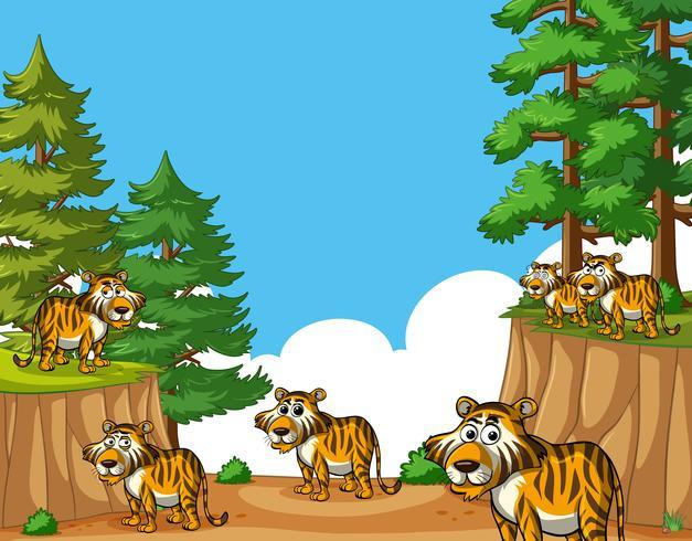 Tigrar på berget på dagtid vektor