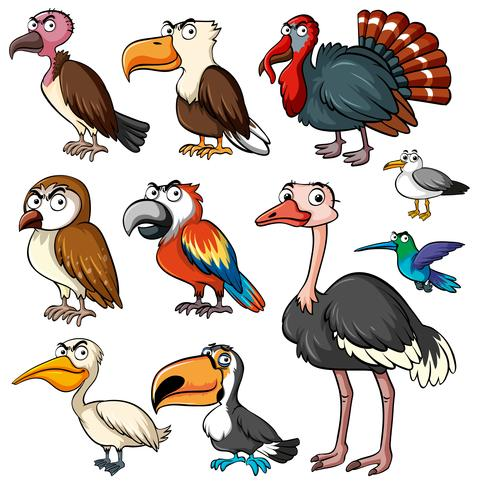 Different kinds of wild birds