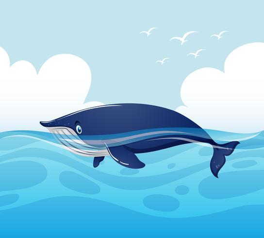 Blauwe vinvis die in oceaan zwemt vector