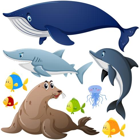 Différents types d'animaux marins